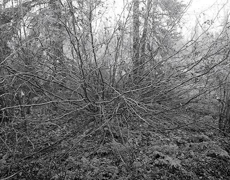 branches-atherton.jpg