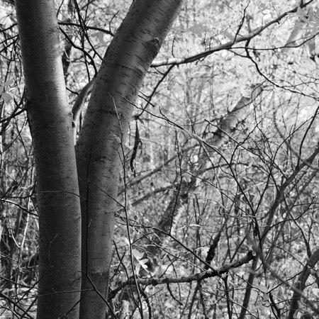 branches-durbin.jpg