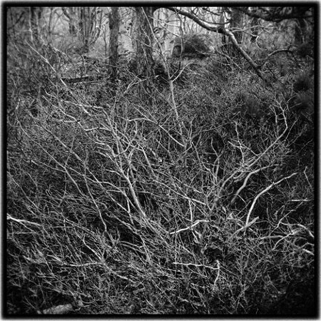 branches-hobson.jpg