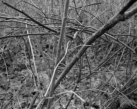 branches-plummer.jpg