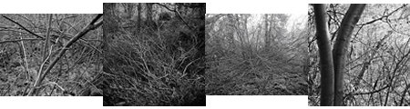branches composite
