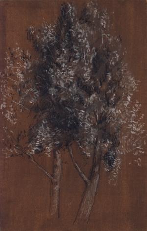 treeonbrowntintedpaper-300.jpg