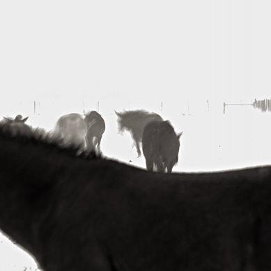 10309-fb_horses_snow.jpg