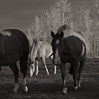 10419-fb_horses_sunset.jpg