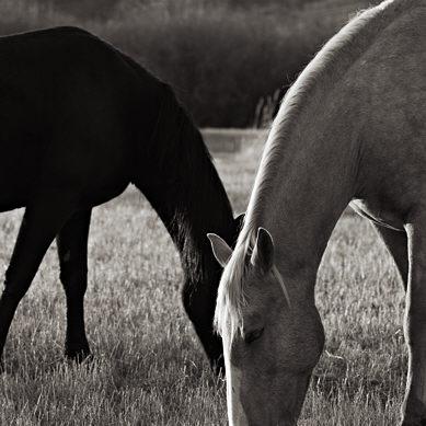 10796-cg_horse.jpg