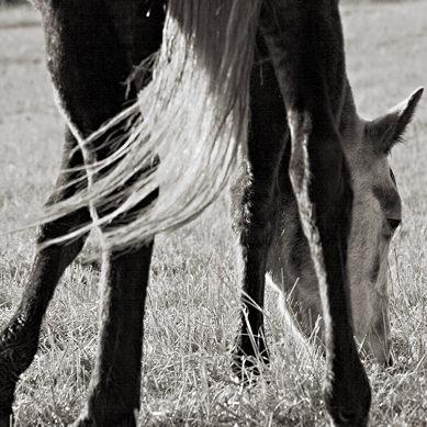 10912-cg_horse.jpg