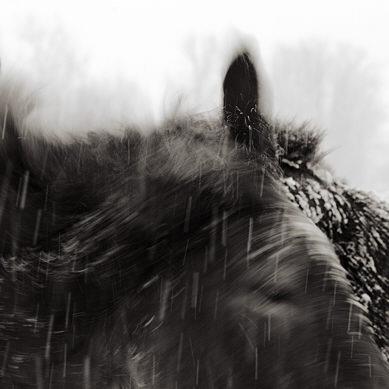 11088b-fb_horses_snow.jpg