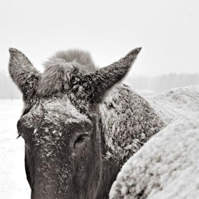 11134-fb_horse_snow.jpg