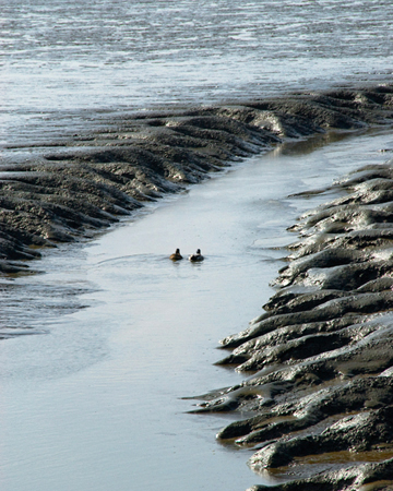 mudswimming.jpg