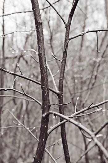 13047-twigs-f8.jpg