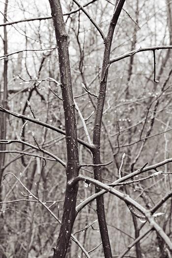 13049-twigs-f16.jpg